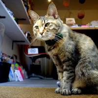catstaff1