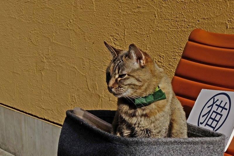 catstaff2