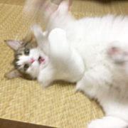 ペットシッター猫 ウサギ