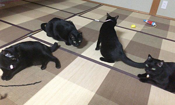 黒猫4にゃん